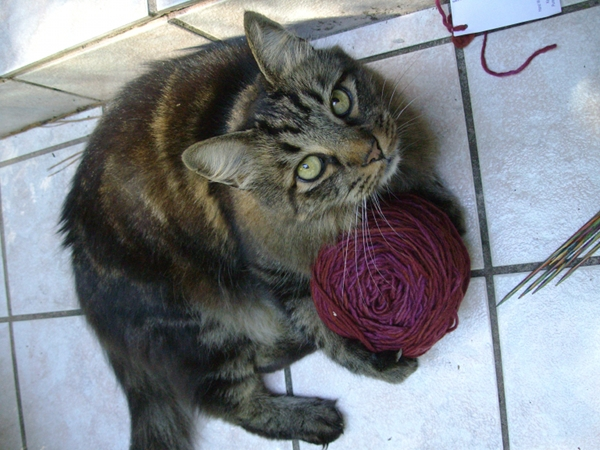 My yarn. Mine.